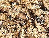 Multiples buzz