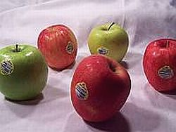A List of Different Varieties of Apples
