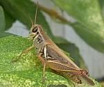 Have a bug scavenger hunt